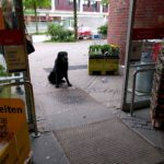 Patiently waiting for their person hamburglife groceryshopping offleash dogsofinstagram hamburghellip