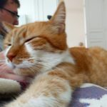 Saturday snuggles zekecat catsofinstagram gingerkitty seniorcat snoozin allthepets sickinbed snuggles