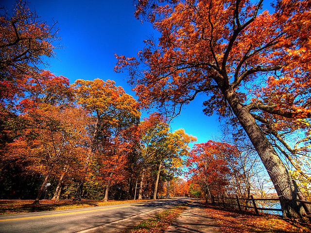 Fall Scene - Niagara on the Lake